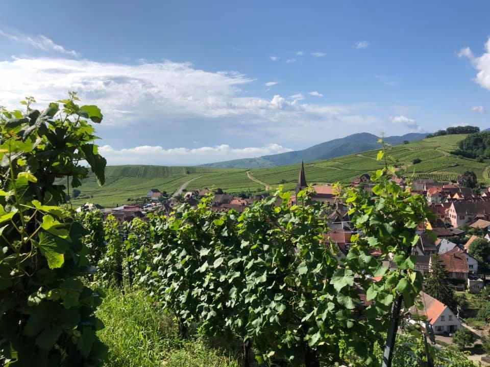 Le Domaine de l'Oriel - 68230 Niedermorschwihr (Alsace) De père en fils depuis 13 générations…